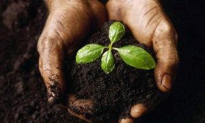 servizi-op-agorà-organizzazione-produttori-agricoli-metaponto-matera-basilicata