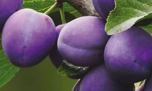 altri-prodotti-op-agorà-organizzazione-produttori-agricoli-metaponto-matera-basilicata