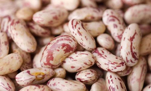 fagioli-borlotti-prodotti-op-agorà-organizzazione-produttori-agricoli-metaponto-matera-basilicata