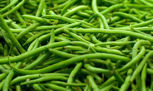 fagiolini-prodotti-op-agorà-organizzazione-produttori-agricoli-metaponto-matera-basilicata