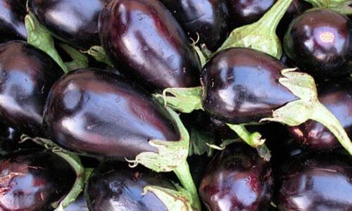 melanzane-prodotti-op-agorà-organizzazione-produttori-agricoli-metaponto-matera-basilicata
